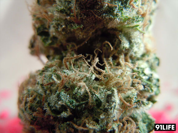 Cherry Pie Kush from San Francisco Bay Area Marijuana Delivery CRAFT Collective