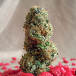 cherry_pie_kush_smallphoto