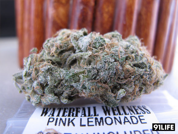 Marijuana Strain Pink Lemonade from Waterfall Wellness