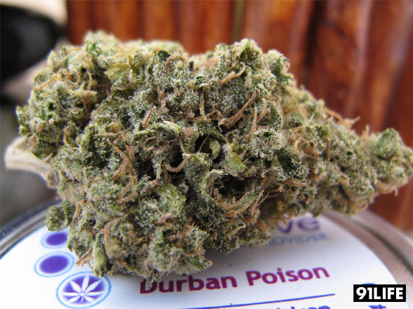 Durban Poison from Medithrive