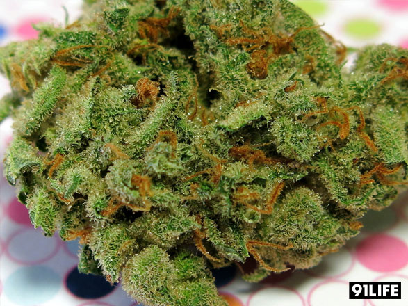Marijuana Strain Candy Jack from Crystal Paradise <a href=