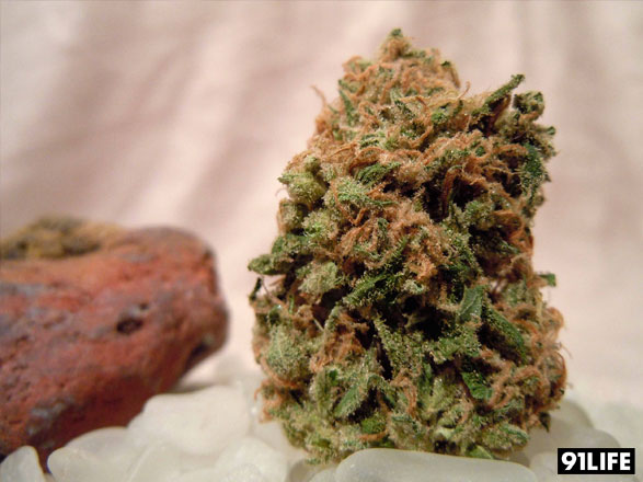 Marijuana Strain Red Congolese from Medicine Bowl Collective, Bay Delivery