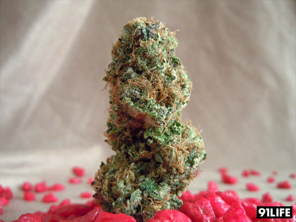 Marijuana Strain Cherry Pie Kush from CRAFT Collective, San Francisco Bay Area