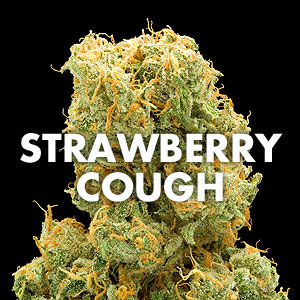 Strawberry Cough Marijuana Strain