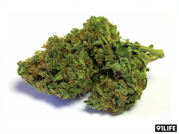 Marijuana Strain Durban Poison from CRAFT Collective, San Francisco Bay Area