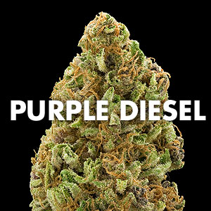 Purple Diesel Marijuana Strain