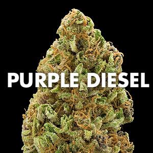 Purple Diesel Marijuan...