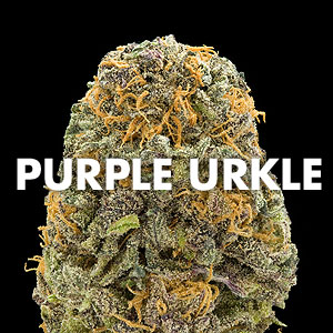Purple Urkle Marijuana Strain