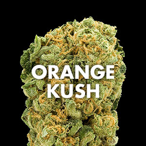 Orange Kush // Expert Marijuana Strain Reviews & Photos