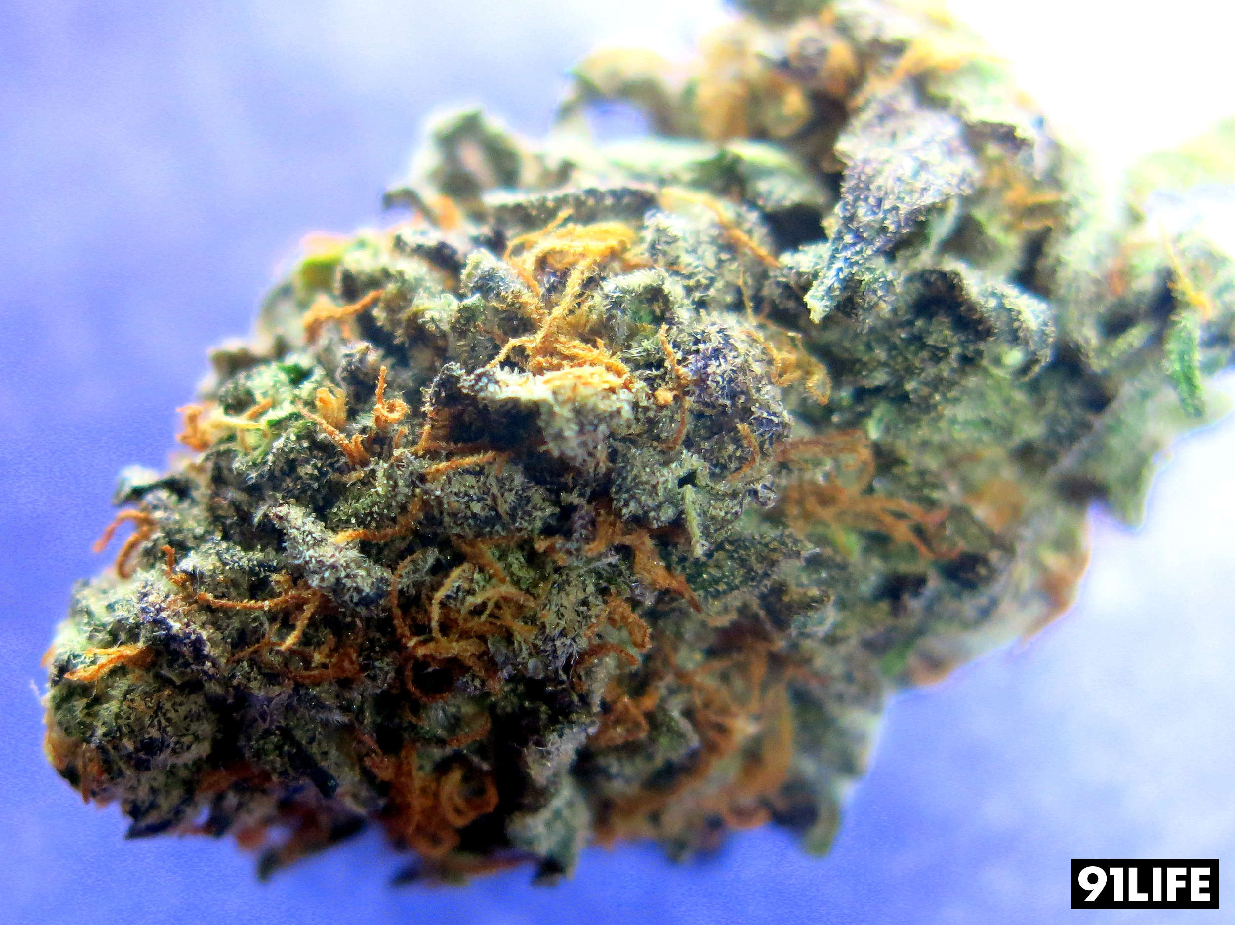 Granddaddy Purple Purple Zack Attack from Los Angeles Dispensary LA Medical Delivery