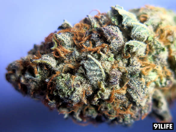 Marijuana Strain Grandaddy Purple Purple Zack Attack from LA Medical Delivery, Los Angeles